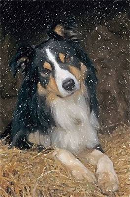 Border Collie Dog Portrait Print by Olde Time  Mercantile