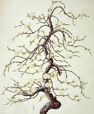 Botanical Illustration Art Print by Natural History Museum, London/science Photo Library