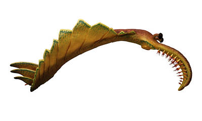 Painting - Burgess Shale Animal by Chase Studio