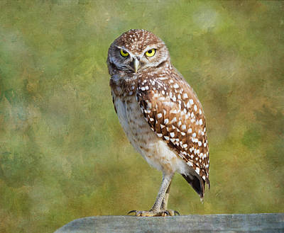 Photograph - A Burrowing Owl by Kim Hojnacki