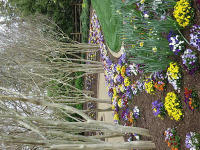 Williamsburg Photograph - Busch Gardens - 12129 by DC Photographer