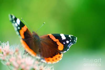Fluttering Photograph - Butterfly by Michal Bednarek