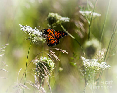 Photograph - Butterfly by Ronald Grogan