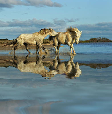 Grace Photograph - Camargue Horses And Reflection by Adam Jones