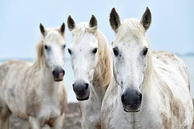 Trio Photograph - Camargue Horses by Dr P. Marazzi
