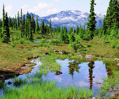Canadian Marsh Photograph - Canada, British Columbia by Jaynes Gallery