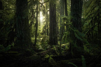 Photograph - Cathedral Grove, Macmillan Provincial by Robert Postma