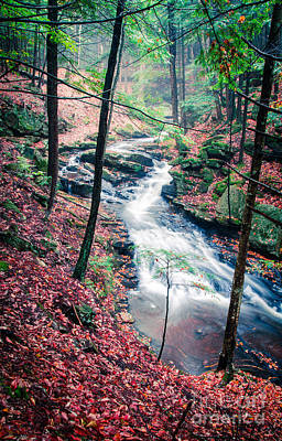 Autumn Foliage Photograph - Chesterfield Gorge New Hampshire by Edward Fielding