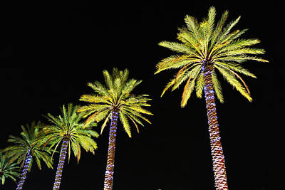 Digital Art - 4 Christmas Palms by Michael Thomas