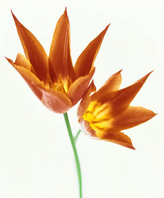 Close Up Of Flowers Art Print