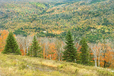 Photograph - Colorful Fall Forest Near Rangeley Maine by Keith Webber Jr
