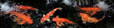 Photograph - Colorful Koi Fish Swimming Underwater by Panoramic Images