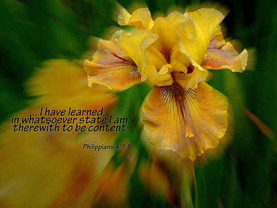 Contentment Art Print by Larry Bishop
