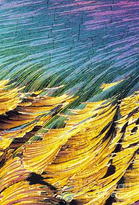 Cortisol Crystals, Light Micrograph Art Print by David Parker