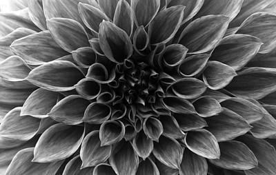 Photograph - Dahlia Flower by Sumit Mehndiratta
