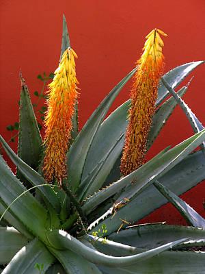 Photograph - Desert Flowers by Robert Lozen