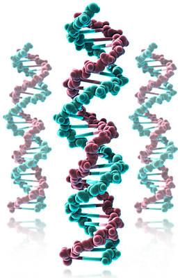 Dna, Molecular Model Art Print