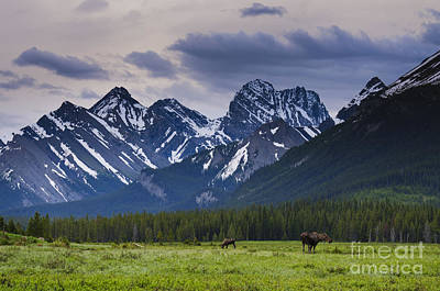 Engadine Meadow Art Print by Ginevre Smith