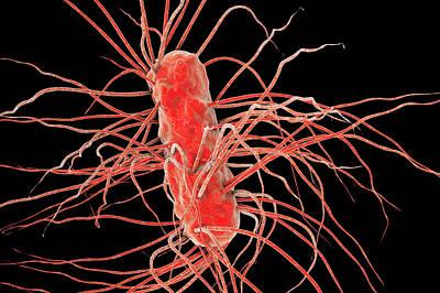 Escherichia Coli Bacteria Art Print by Kateryna Kon/science Photo Library