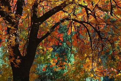 Fall Color Art Print