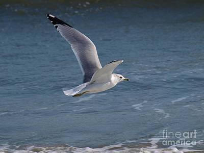 Photograph - Flight by Jeffrey Akerson
