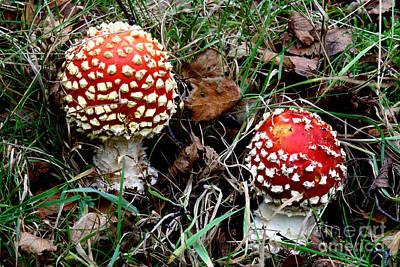 Fly Agaric Fungi Art Print by Dr. Keith Wheeler