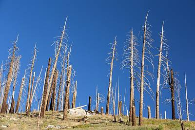 Forest Destroyed By Wild Fires Art Print