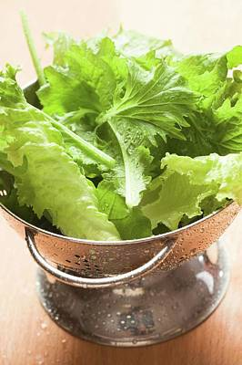 Lettuce Photograph - Freshly Washed Salad Leaves In Colander by Foodcollection
