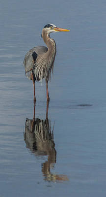 Photograph - Great Blue Heron by Jane Luxton