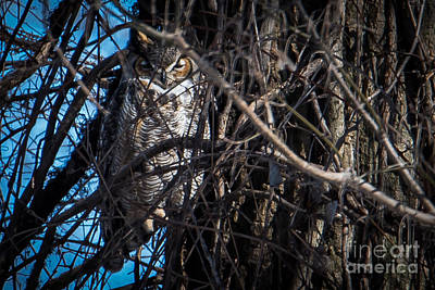 Photograph - Great Horned Owl by Ronald Grogan