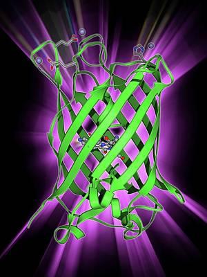 Bioluminescence Photograph - Green Fluorescent Protein Molecule by Laguna Design