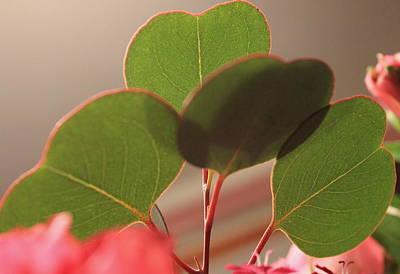 Photograph - 4 Hearts by Trent Mallett