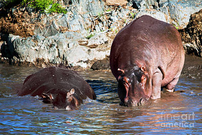 Pond Photograph - Hippopotamus In River. Serengeti. Tanzania by Michal Bednarek