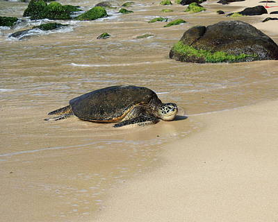 Turtle Photograph - North Shore Honu 1 by Kimberly Reeves