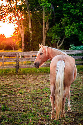 Nature Photograph - Horse On A Farm by Alexey Stiop