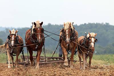 4 Horse Power Original