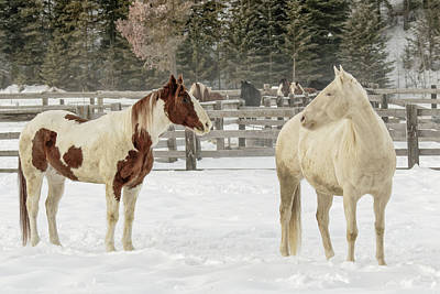 Roundup Photograph - Horse Roundup In Winter, Kalispell by Adam Jones