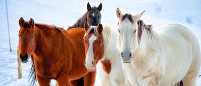4 Horses Art Print