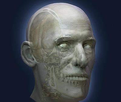 Human Head Art Print