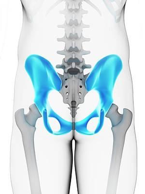 Human Hip Bone Art Print by Sebastian Kaulitzki