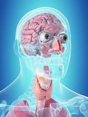Blue Throat Photograph - Human Internal Organs by Sciepro