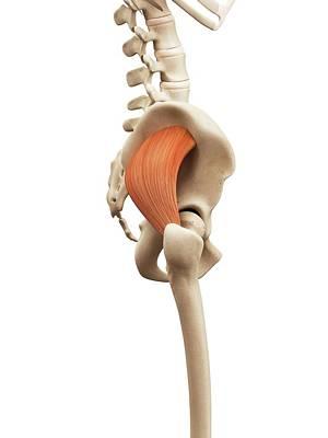 Digitally Generated Image Photograph - Human Muscles by Sebastian Kaulitzki