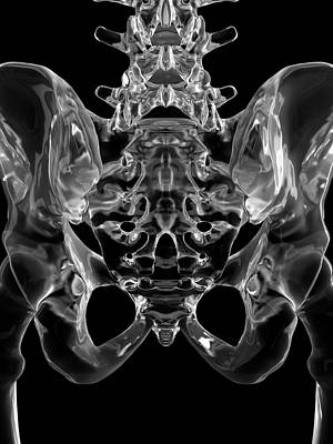 Human Pelvis Bones Art Print