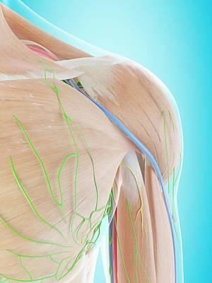 Human Shoulder Anatomy Art Print by Sciepro