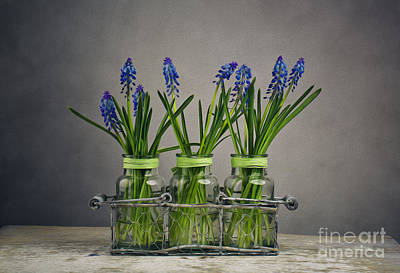Group Digital Art - Hyacinth Still Life by Nailia Schwarz