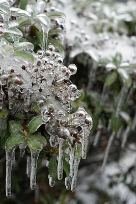 Photograph - Ice  by Heidi Poulin