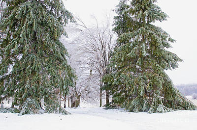Ice On The Trees Art Print by Elizabeth Stone