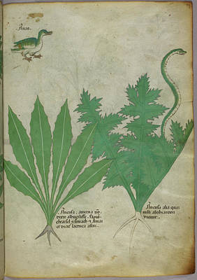 Illustration Of Plants Art Print by British Library