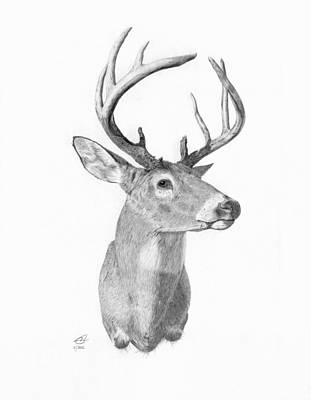 Whitetail Deer Drawing - Iowa Trophy by Cody Thorne