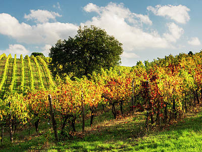 Autumn Farm Scenes Photograph - Italy, Tuscany, Chianti, Autumn by Terry Eggers